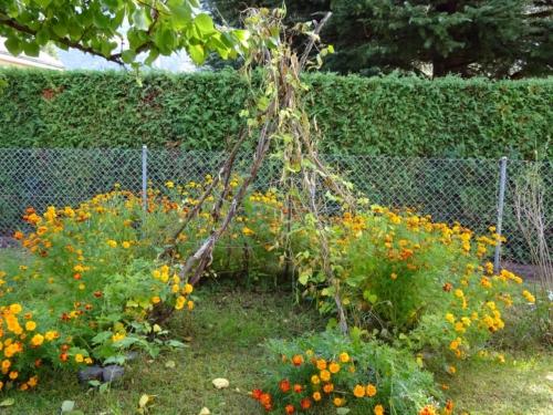 Présentation du jardin
